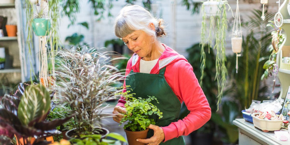 12 Best Plant Delivery Services