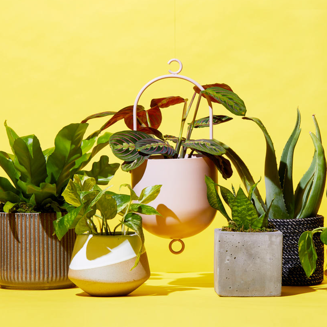 Best Places to Buy Plants Online