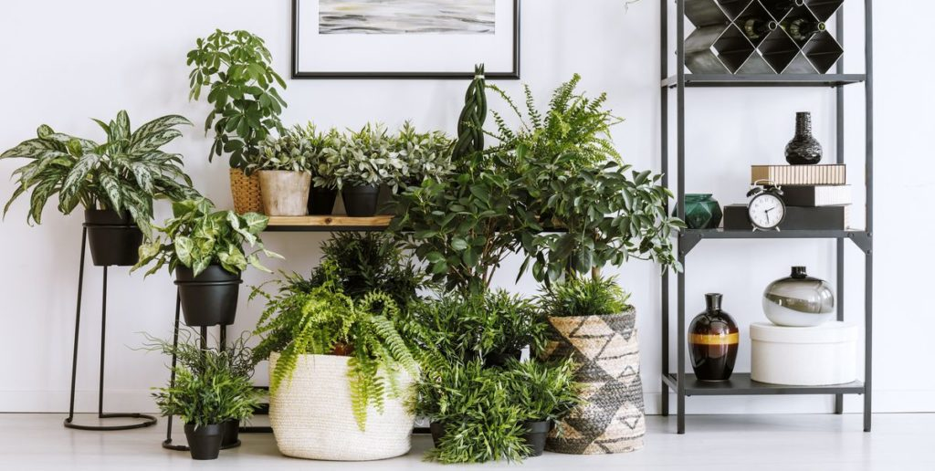 Best Aesthetic Plants