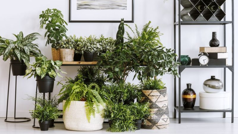 10 Best Aesthetic Plants – Beautiful Indoor Houseplants