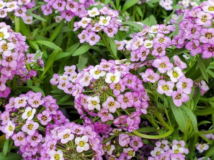 20 Best Ground Cover Plants and Flowers