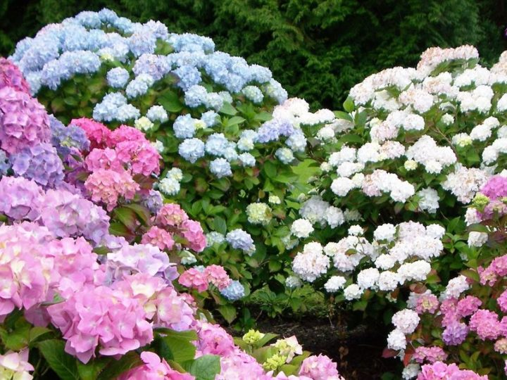 20 Best Perennial Flowers – Easy Perennial Plants to Grow