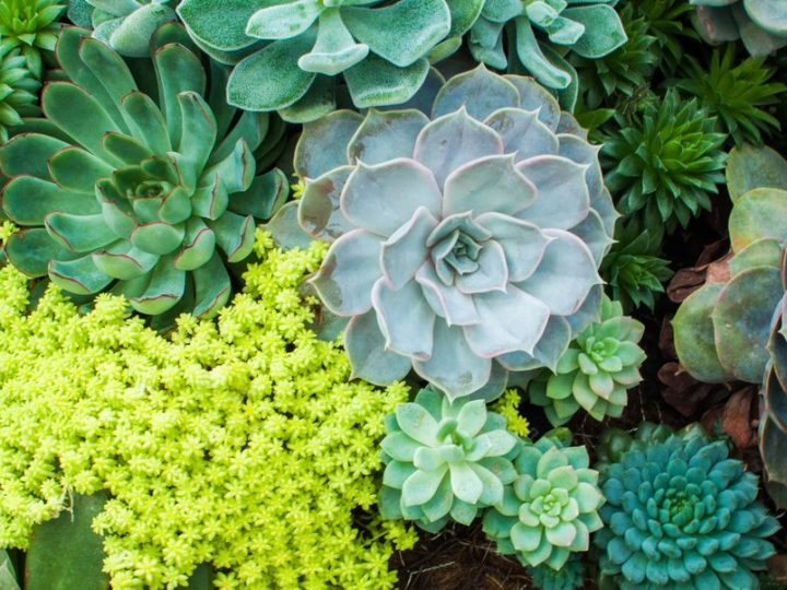 5 Mistakes You're Making With Your Succulents