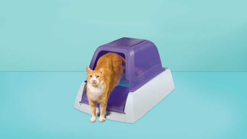 6 Best Self-Cleaning Litter Boxes of 2020