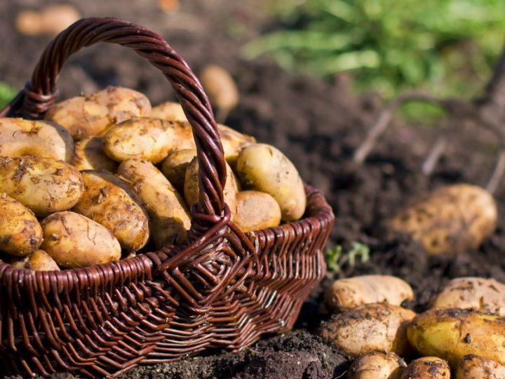 7 Ways to Grow Potatoes at Home