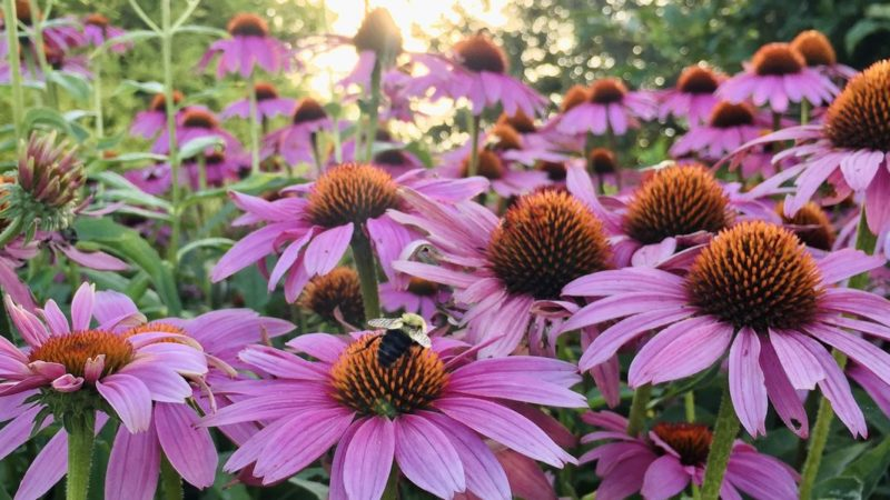 9 Best Drought-Tolerant Plants – Drought-Resistant Flowers, Grasses, Vines