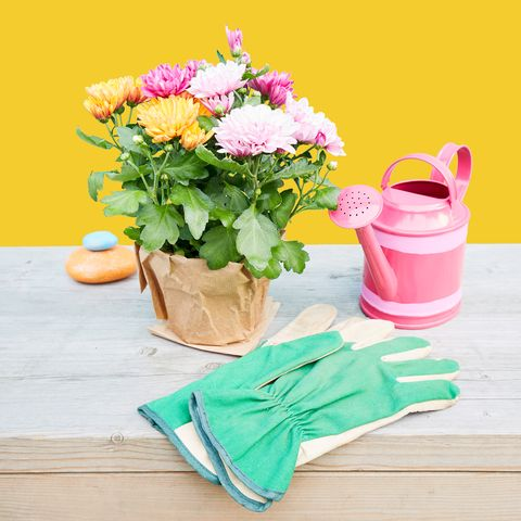 flowers, watering, gloves