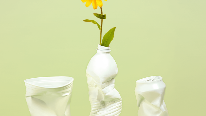 What Does Eco-Friendly Mean? Difference Between Sustainable and Green Products