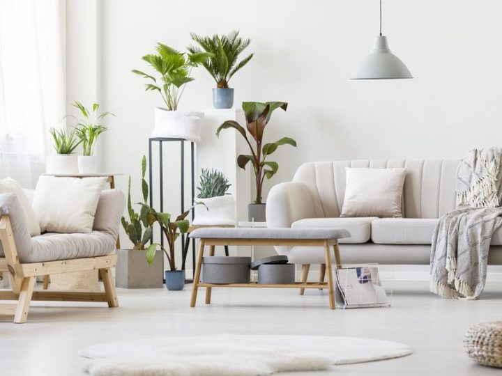 12 Best Air Purifying Plants