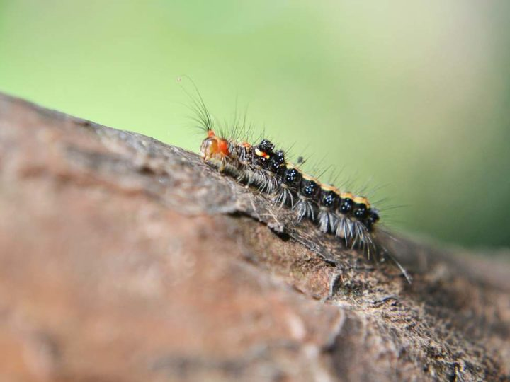 Pest Control Tips: Using Organic Methods to Rid Home Bugs