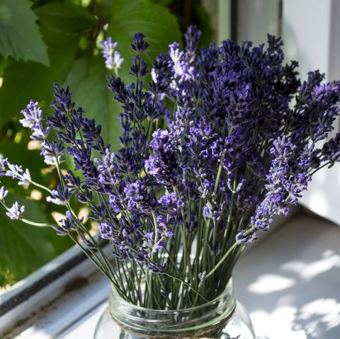 lavender flowers in a vase on a window sill