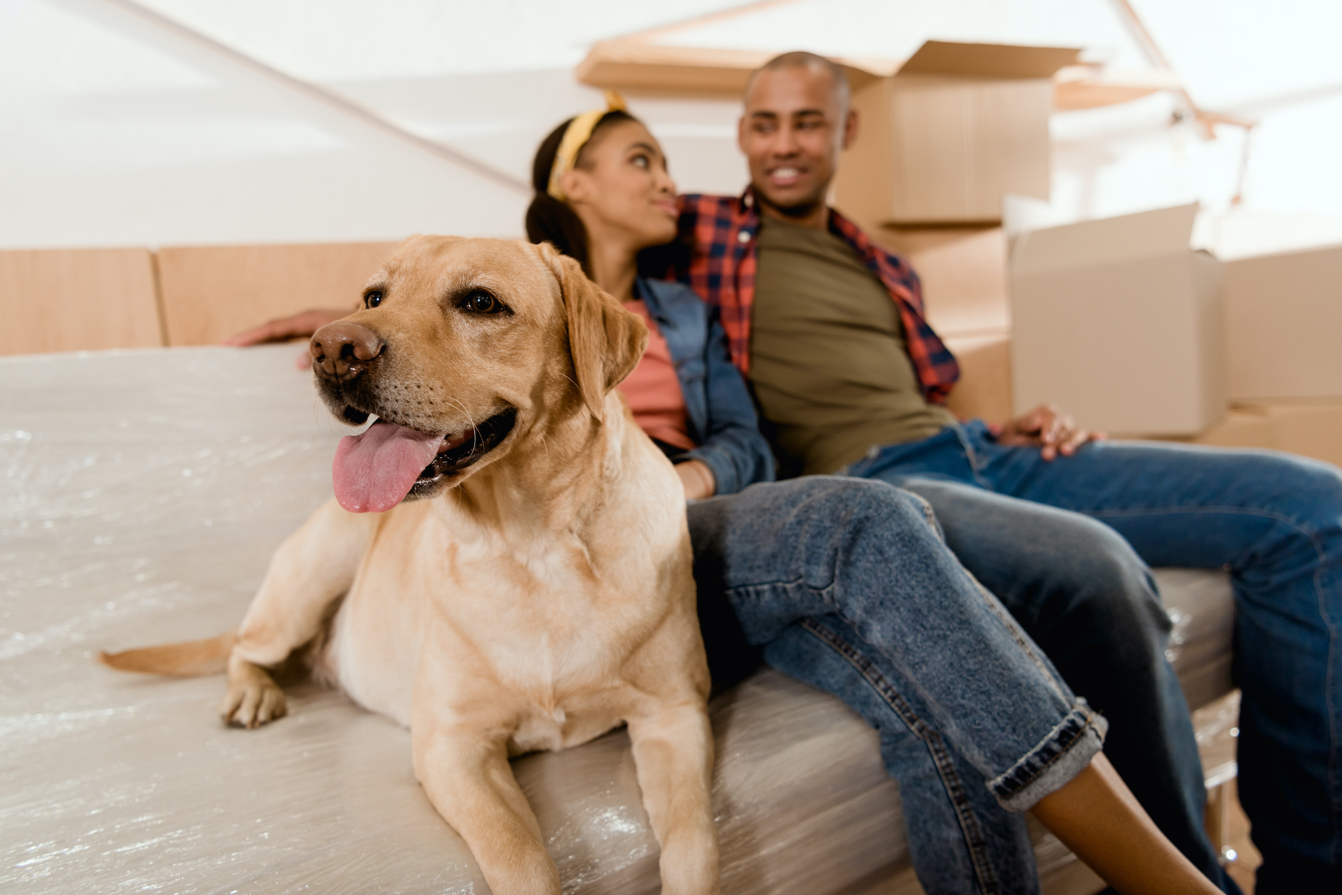 What to Know About Pet Fees