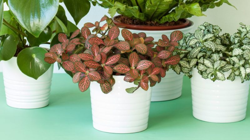 25 Easy Houseplants – Easy To Care For Indoor Plants