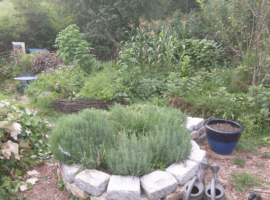 Perennial Food Gardening Methods – What Are the Differences?