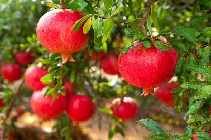 How to Seed, Eat, and Store Pomegranates