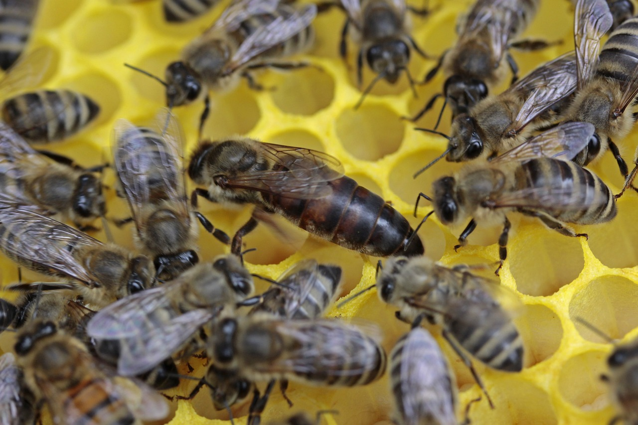 What is a Queenless Hive and What Can You Do to Fix It?