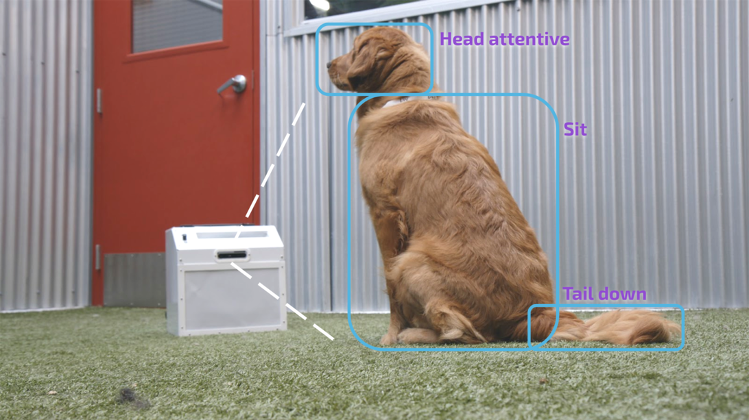 Help dogs deal with separation anxiety with this AI trainer