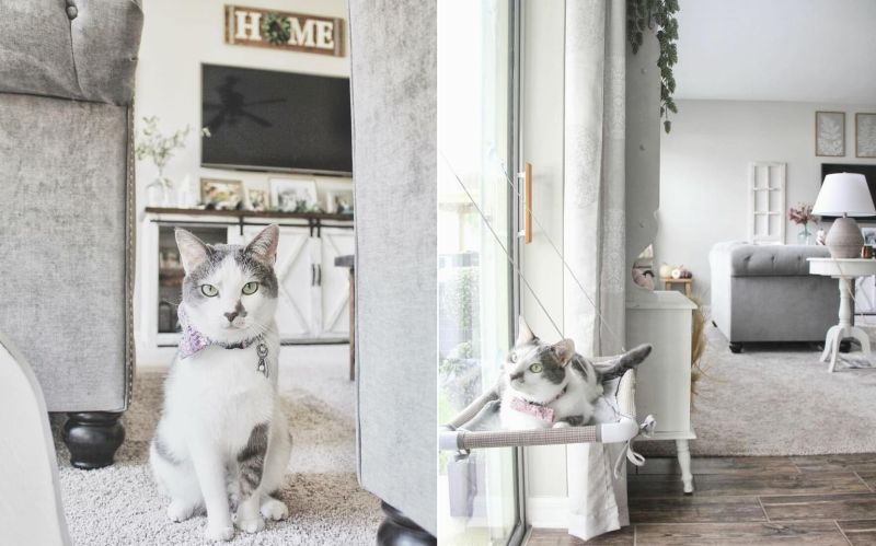 The couple builds a separate cat room for their beloved kitty