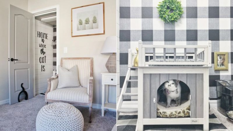 Couple Builds Cozy, Dedicated Cat Room for Their Beloved Stella