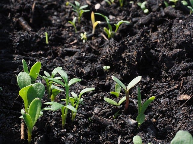 6 Growing from seed is unreliable