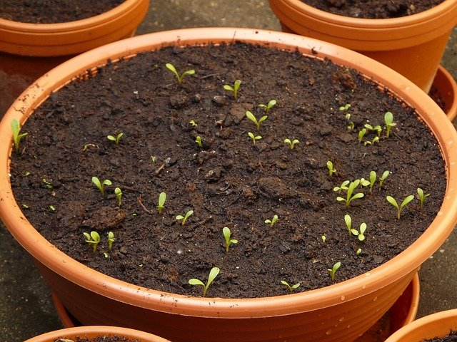 3 Growing from seed takes time