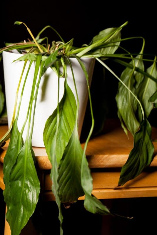 Are You Overwatering Your Plants? And How to Fix Them