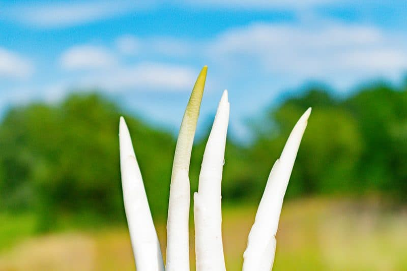 15 Brilliant Uses for Cattails