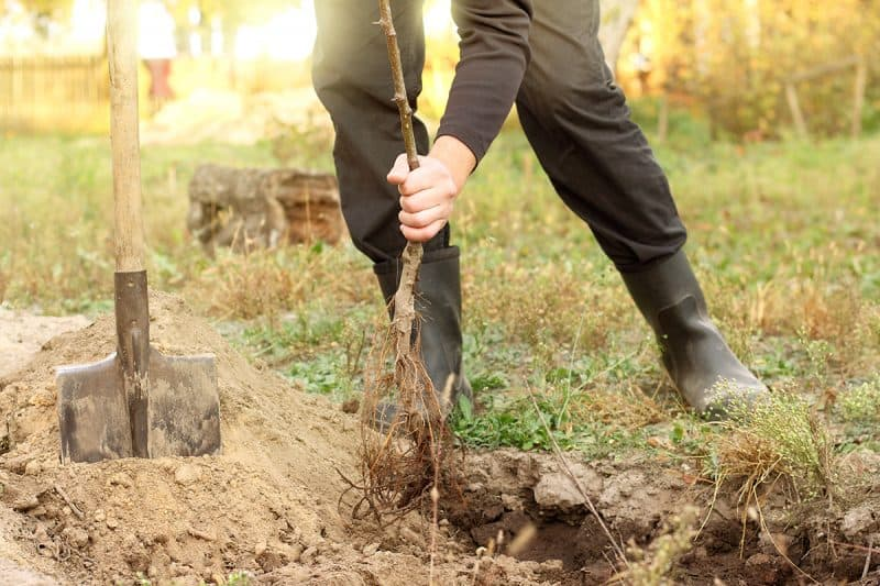 10 Steps You Shouldn't Ignore When Starting an Orchard