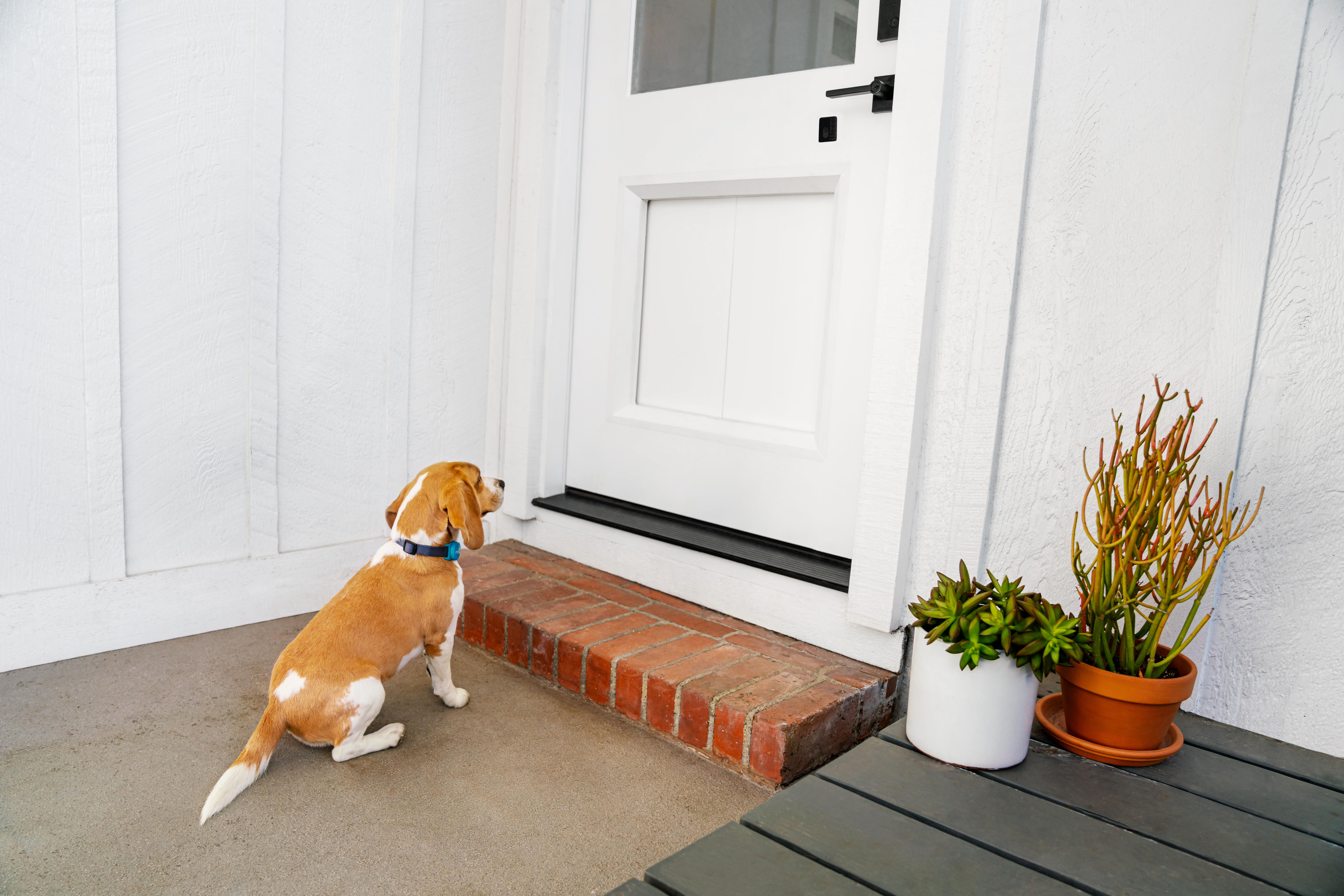 shot-17-dogdoor-outside-jumping-in-096-r5