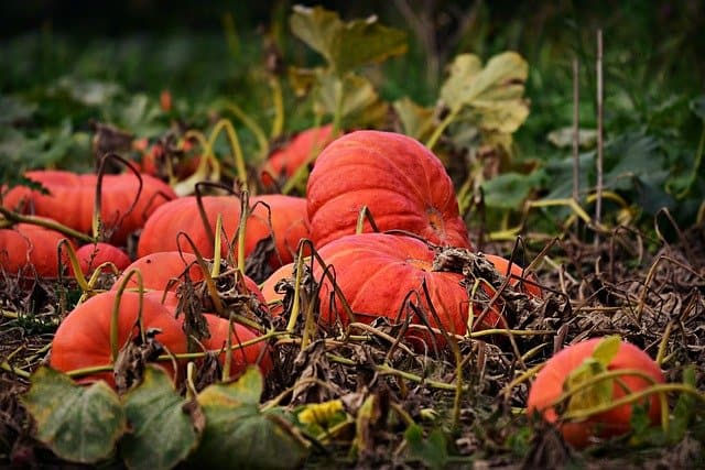 6 Fall crops extend your harvest