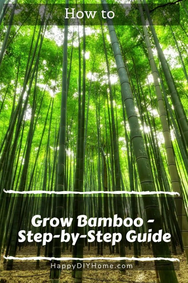 How to Grow Bamboo 1