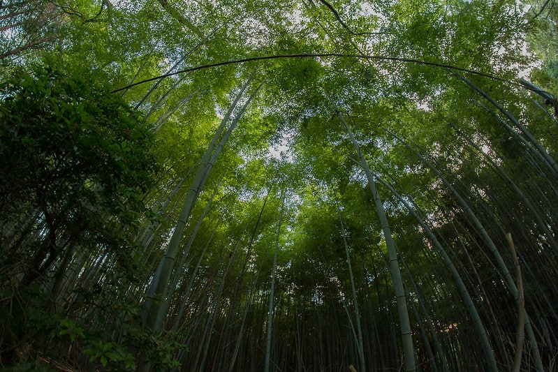 1 Bamboo Forest