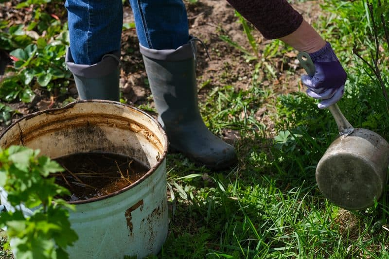 How to Make Weed Tea Fertilizer to Boost Your Garden