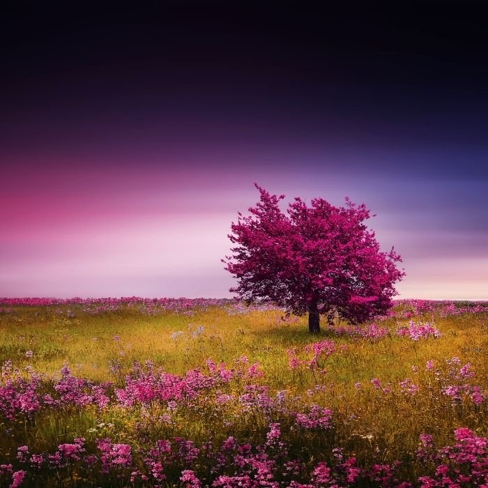1. Pink tree is soothing