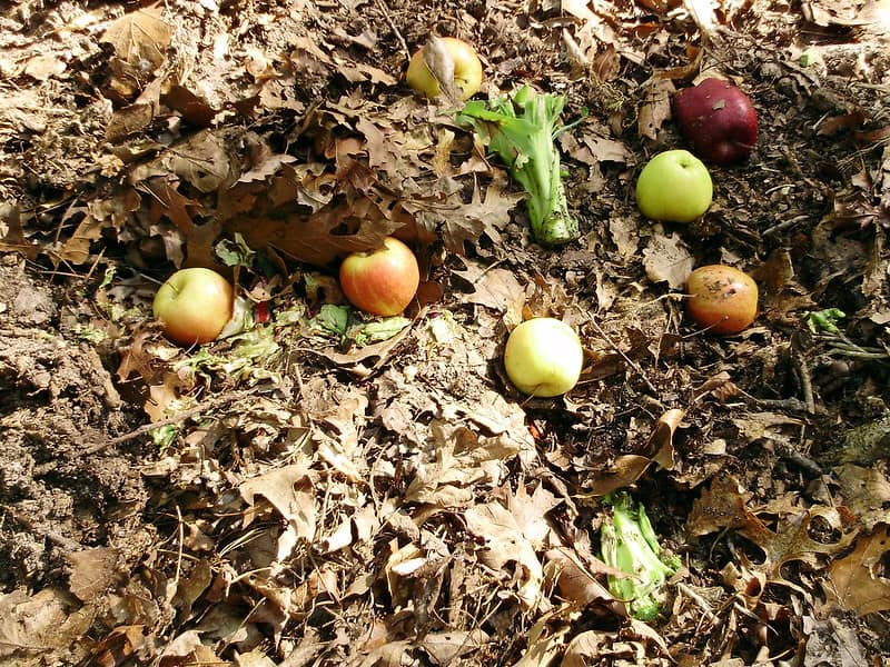 1 Compost Pile
