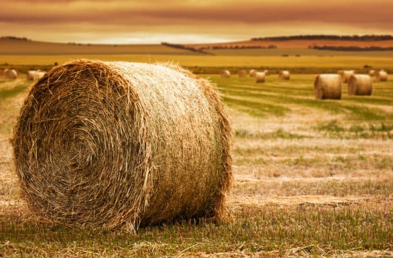 8 Hay Buying Tips to Provide Your Livestock With Quality Feed