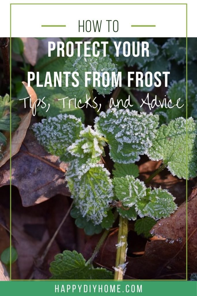 8. Protect plants from frost
