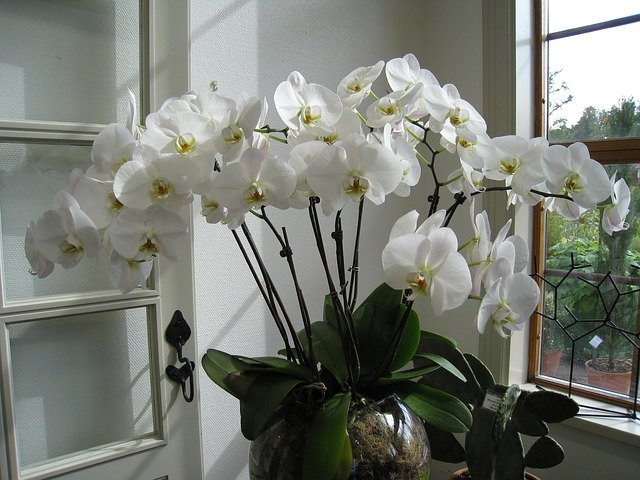 4 Repotting orchids is easy