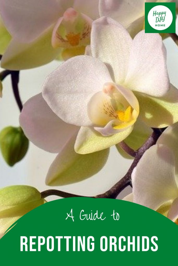 Repotting orchids 2