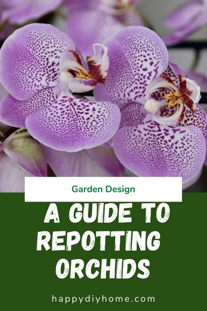 Repotting orchids 1