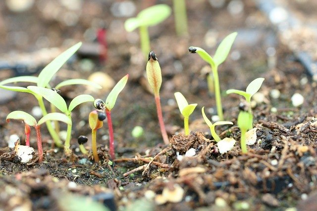5 Germinate in light warm place