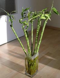 7 A tall stately plant