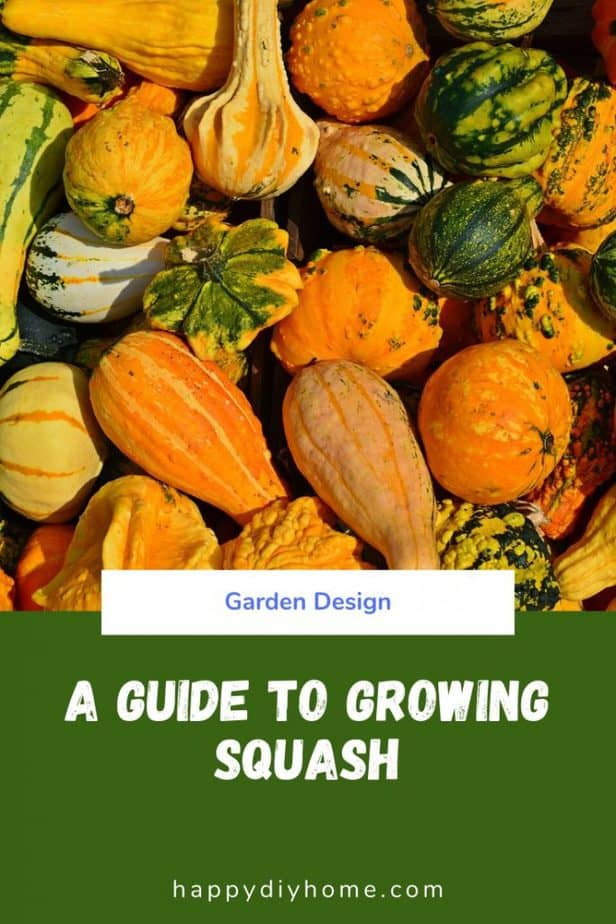 Growing Squash Cover Image