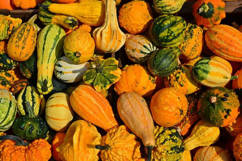 7 Bright flavorsome and coming in a range of varieties growing squash is a fascinating journey