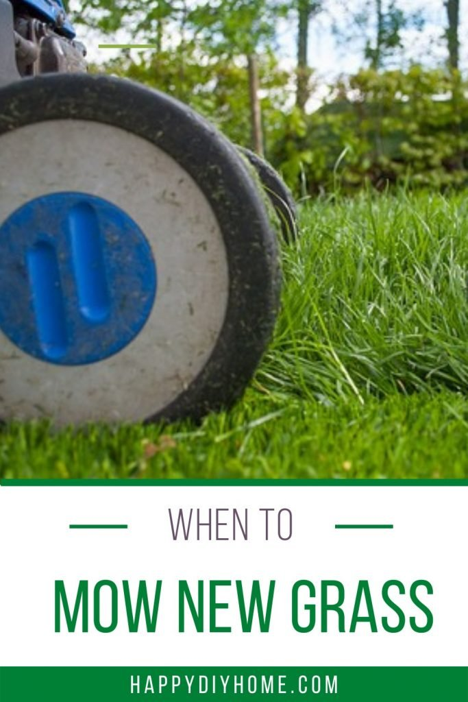 When to mow new grass 2