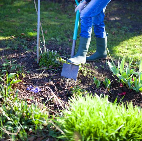 woman digging a hole in the garden with a shovel