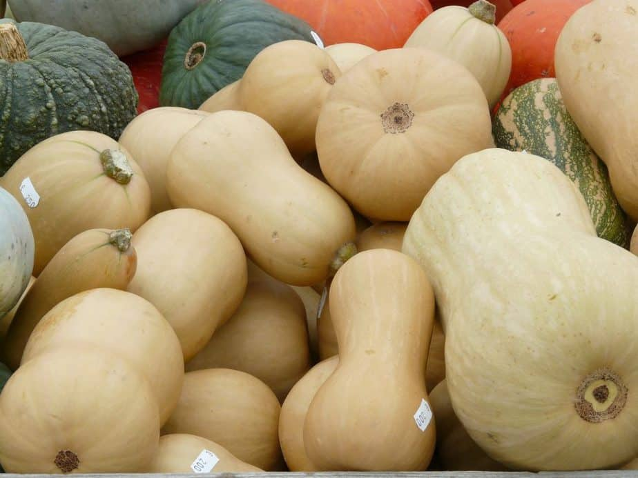 1 Growing squash is a fascinating journey