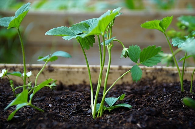 3 Plant in well draining rich soil