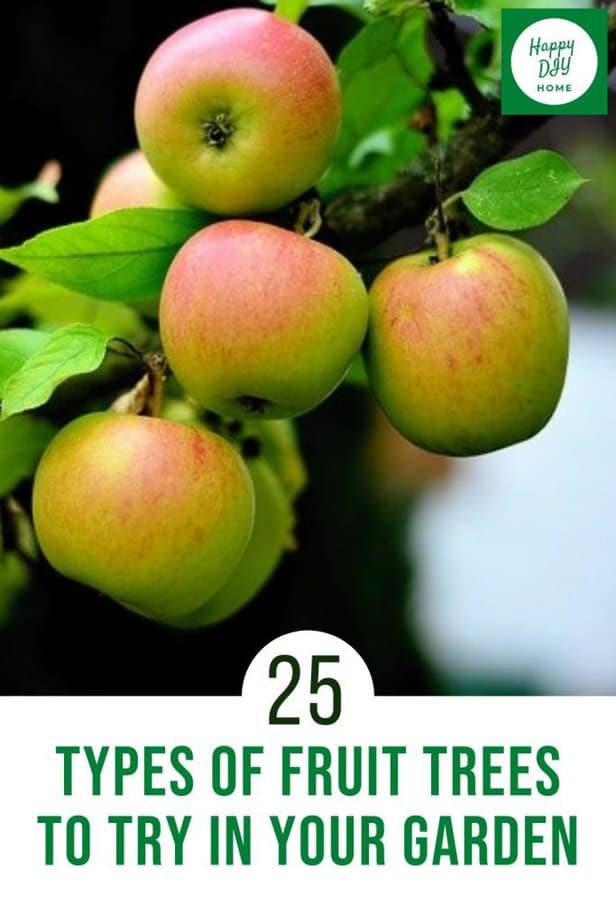 Types of fruit trees 2