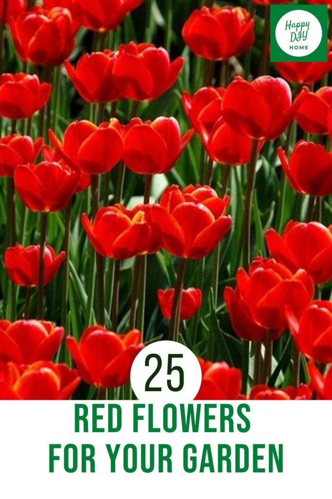 Red Flowers 2